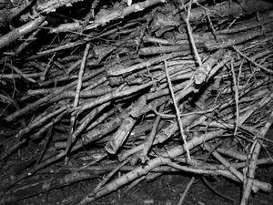 INNER FOREST VII