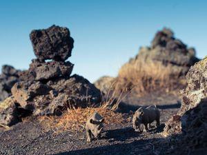 Black Rhinoceros, Laufskalavarda Iceland