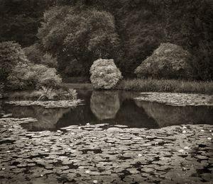 "Lily Pond, Biddulph Grange, 18.5x16"" Platinum Palladium © Beth Dow"