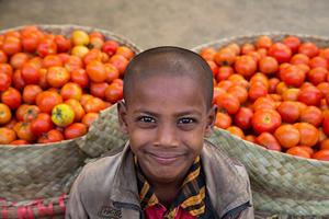 Tomato Boy