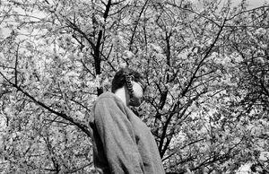 Blossom © Velibor Bozovic