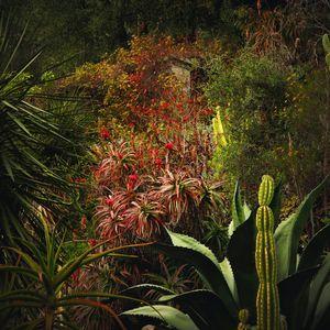 Jungles 08 © Olivia Lavergne