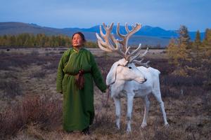 The Tsaatan Woman with Reindeer