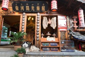 The Husky, Shuhe Old Town, Yunnan, China.