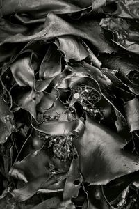 Seaweed 438, Seawall, Maine © Alan Henriksen