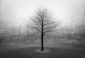 stadtbaum#7