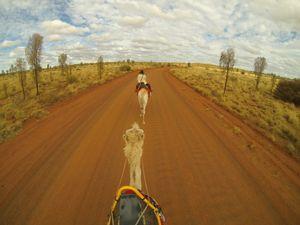 Camels in Central Australia