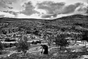 A woman tending her yard in At-Tuwani. South Hebron Hills. Nov. 29, 2013. West Bank, Palestine.