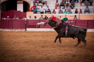 "A member of the Évora forcados performes a face catch at Barbarela style, grabbing the bull by the neck. The forcado must be kept in the head of the bull until he stops, otherwise he has to performe another face catch. The ""pega"" or face catch is the first part of the forcados performance. © Eduardo Leal"