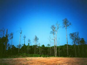 Blue Jungle 006, 2005, Archival Pigment Print