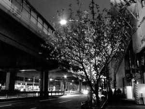 Tokyo blur #19