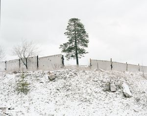 Pine-tree growing next to the workshop (Russia, Tolyatty, 2015)