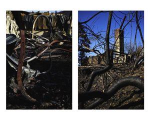 Portraits of a fire / Retratos de un incendio