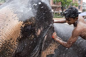 Janmasthami, Dhaka, Bangladesh  The ceremonial elephant is washed for Janmasthami, Krishnas birthday, at Dhakeshwari Temple in Dhaka before being paraded through the capital citys streets. © Claudio Cambon
