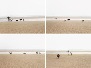 "Dogs on Sandymount Strand, from the series ""Jumping for Joyce © Michael Marten"