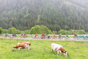 Stage: Lombardia. Edolo, Val Camonica.This is a high mountain stage, with a total difference of altitude of 4500 meters.