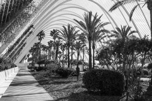 Palms and Arches