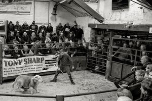 Herdwick Tup Auction, Broughton-in-Furness, 2017