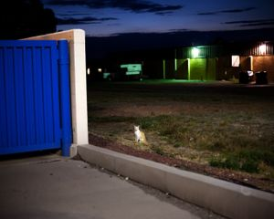 From the project, Wide Eyed © Jon Horvath