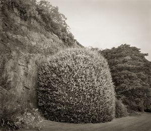 "Ball, Powis Castle, Wales, 18.5x16"" Platinum Palladium © Beth Dow"