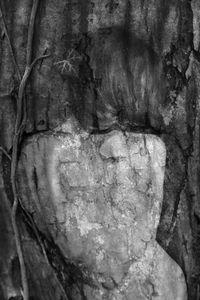 Arbor Essence XI