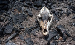 Sittwe, Myanmar, 2012. The skull of a goat, burnt to death as villages escaped their arsoned homes. © Spike Johnson