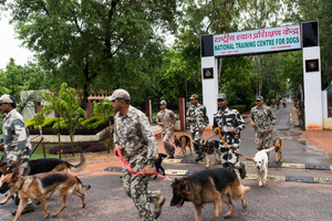BSF search and rescue dog squad leave the NTCD campus for their routine training exercises in the morning. They're sometimes trained in unfamiliar territory to hone their smell-detection skills.