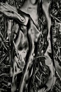 Seaweed 312, Seawall, Maine © Alan Henriksen