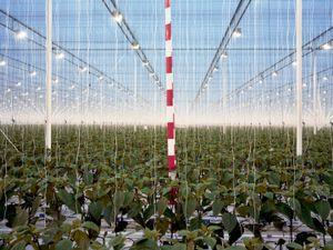GROWTH, Greenhouse Wieringermeer, Wieringermeer