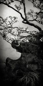 Suzhou Blossoms