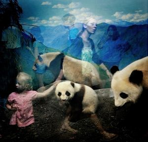 "Pandas, from the series ""Natural History"" © Traer Scott"