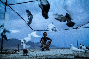 Daily life _Love of birds _ Gerash 2015