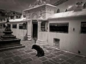 Dog, Boudhanath, Kathmandu