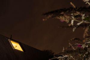 Nighttime Butterfly Bush (Reach), 2015