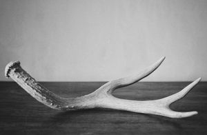 """Antler"" © Lisa Blair"