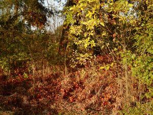Forest near the Bełżec extermination camp site.