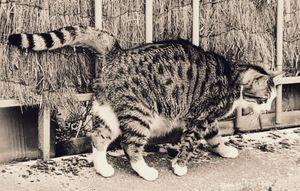 Stray Cat 4