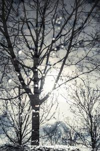 Winter © Davide Weber
