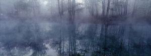 Ichetucknee Fog