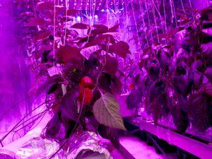 INFUSION, Plantlab, Den Bosch