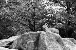 The rock jumper