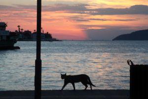 Street cat, Güllük, Mugla Province, Aegean Sea
