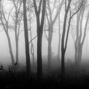 Forest Fog 6