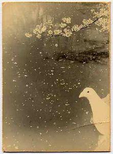1121 © Masao Yamamoto