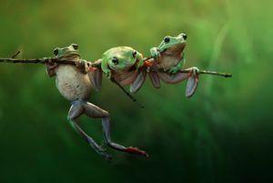 Frog story. Three cute frogs in the morning light. © Harfian Herdi, Indonesia, Shortlist, Nature & Wildlife, Open. Courtesy of 2015 Sony World Photography Awards.