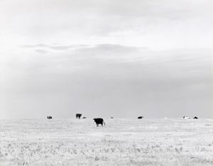 North of Briggsdale, Colorado. 1973. Diptych. © Robert Adams. Image courtesy of Fraenkel Gallery.