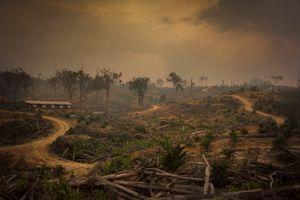 Lost Habitat, Borneo Indonesia