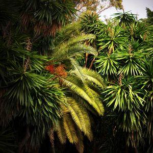 Jungles 05 © Olivia Lavergne