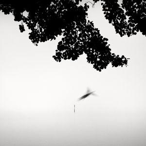 Oneiric Bird © Frang Dushaj