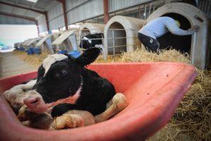 Organic Dairy Farm - Spain